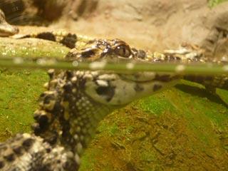 円山動物園 は虫類・両生類館