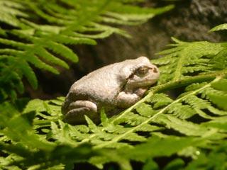 円山動物園 カエル